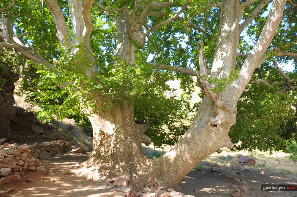 Doğanlı Çınarı Tabiat Parkı